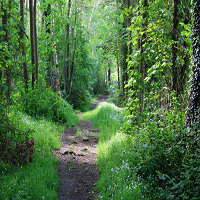 Forest image 1
